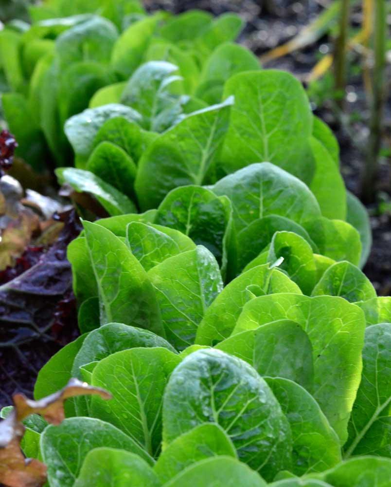 Leafy Greens Silver Poplar Studios